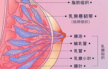 悬韧带修复仪如何修复胸部悬韧带?搭配按摩手法效果更好?